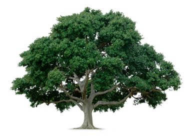 Tree Elling Farm